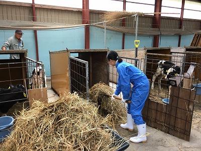酪農体験(職業体験)