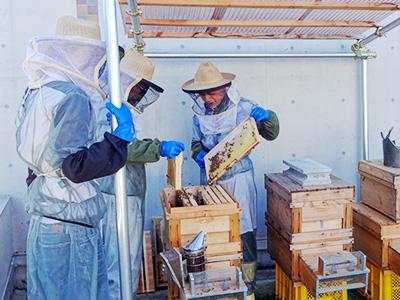 本館屋上にある西洋ミツバチの巣箱。