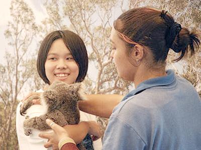 自然をそのまま残した広大な動物園「ハートリーズ・クロコダイル・アドベンチャー」では、コアラを抱っこしたり、ボートクルーズでクロコダイルを間近で見たりできます。