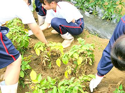 農場実習4