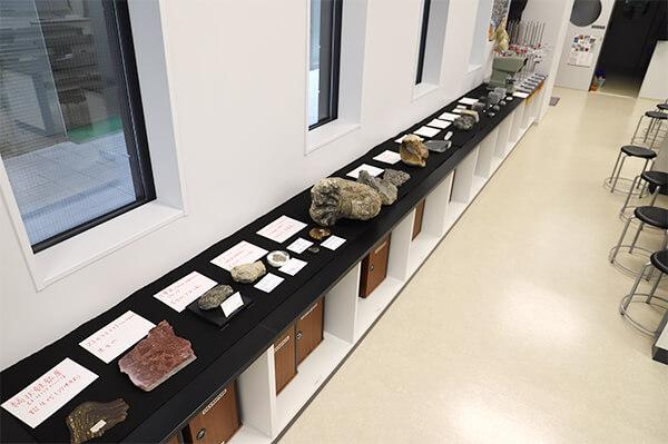地学実験室内の展示。アンモナイトのスライス断面を手に 取ったり、鉱物を直接触ったりすることができる。